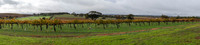 Vineyard, The Louise, Barossa Valley, South Australia